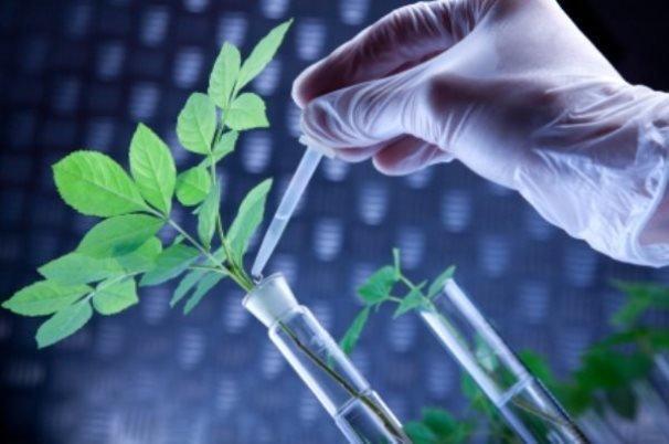 استانداردهای ملی زیست فناوری مطالعه و آسیب شناسی شد