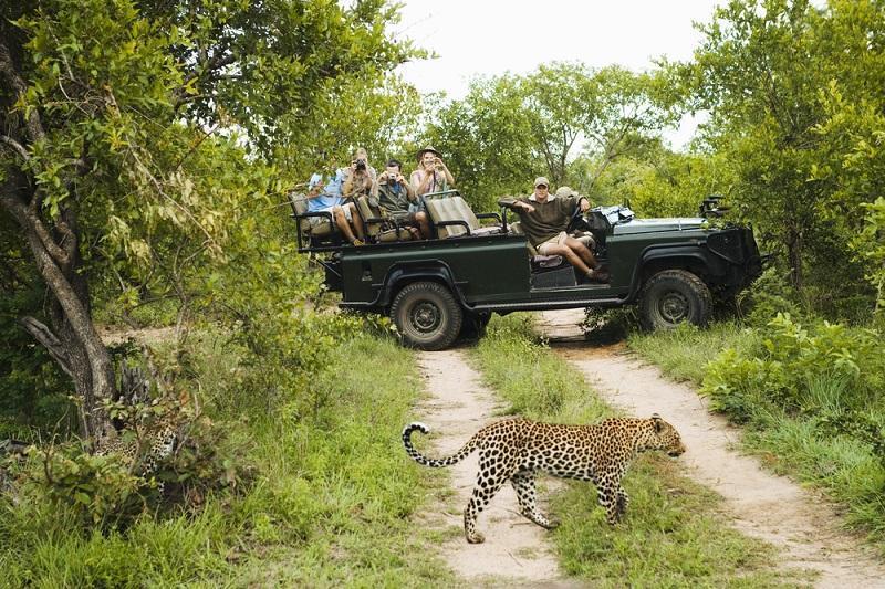 سافاری چیست (Safari)؟