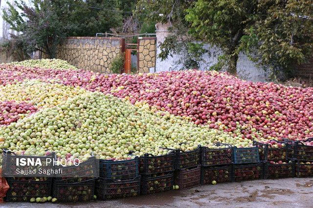 لزوم تجمیع مراکز جمع آوری سیب در آذربایجان غربی