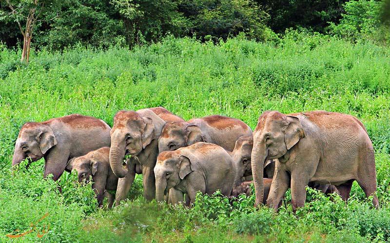 پارک ملی کوری بوری در تایلند