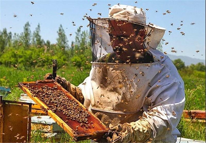 صادرات محصول زنبورستان های آذربایجان شرقی به چین و مالزی