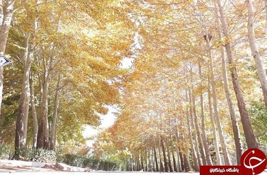 تصاویری زیبا از پاییز حاشیه زاینده رود