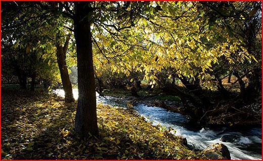طبیعت پاییزی الشتر در قاب تصویر