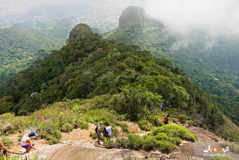 پارک ملی تیجوکا برزیل؛بزرگترین منطقه جنگلی - مسکونی جهان، عکس